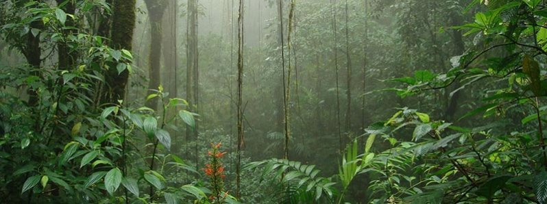 Monteverde Cloud Forest in our Classic Costa Rica Vacations Package